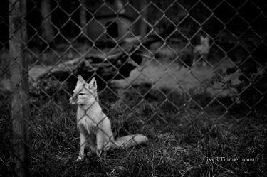 Captivity pt.1