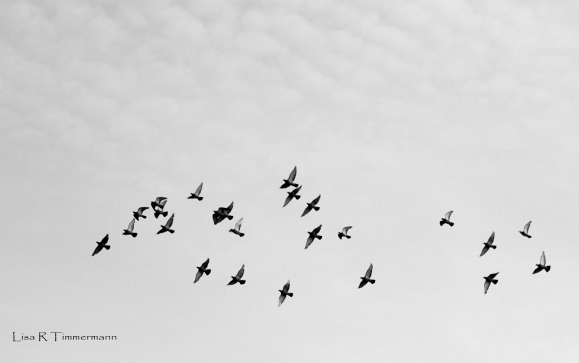 birdsbw