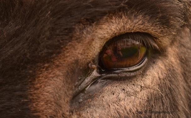 A donkey's eye