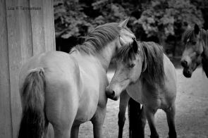 Wild horses in New Forest, UK